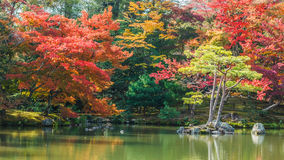 Kyoko-qui ou lagoa do espelho no templo de Kinkaku-ji em Kyoto Imagens de Stock Royalty Free