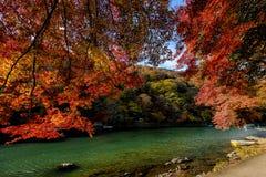 Kyoto autumn Royalty Free Stock Photo