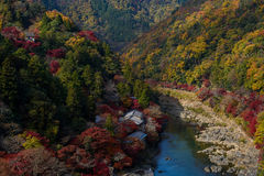 Kyoto autumn Stock Image