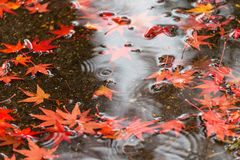Kyoto autumn season Stock Photo