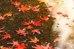 Kyoto autumn season Royalty Free Stock Photo