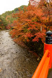 Kyoto autumn season Royalty Free Stock Photos