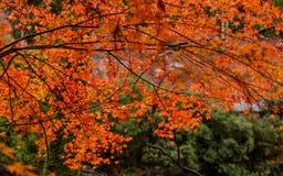 Kyoto autumn season Stock Photos