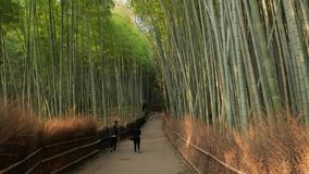 Kyoto Bamboo Forest stock video