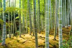 Kyoto bambusa las Zdjęcie Royalty Free