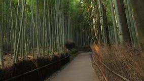 Kyoto bambuskog stock video