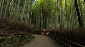 Kyoto bambuskog arkivfilmer