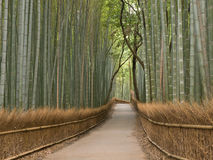 Kyoto-Bambuswaldung Lizenzfreies Stockfoto