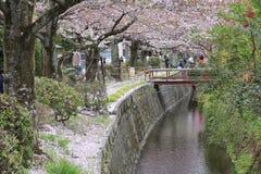 Kyoto cherry blossom Stock Photos