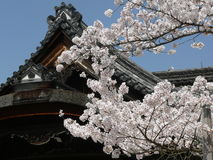 Kyoto cherry blossoms Stock Photo