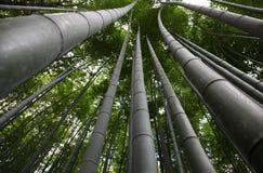 Kyoto de bambu Japão foto de stock