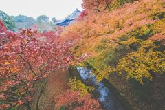 Kyoto, Dongfu Temple. Everyone can find their own maple tree in the temple. Once you enter Dongfu Temple, you will surely be intoxicated with the color in front stock photography