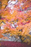 Kyoto, Dongfu Temple. Everyone can find their own maple tree in the temple. Once you enter Dongfu Temple, you will surely be intoxicated with the color in front stock photos