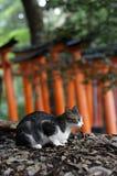 Kyoto Fushima Inari Zdjęcie Stock