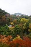 Kyoto höst Royaltyfri Foto