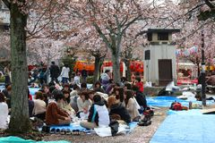 Kyoto hanami party Stock Photography