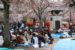 Kyoto hanami party Stock Photography