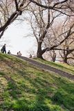 Kyoto, JAPÃO - 3 de abril de 2018: Os povos apreciam ver a flor de cerejeira de florescência bonita em Yawatashi fotografia de stock royalty free