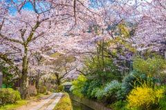 Kyoto, Japão na mola imagem de stock royalty free