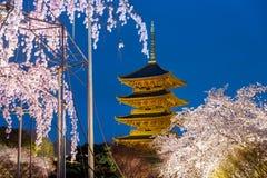 Kyoto, Japón en la pagoda de Toji con el ligh del blossomin de la cereza para arriba en nig imagenes de archivo