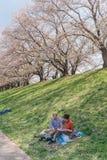 Kyoto, JAP?O - 3 de abril de 2018: Os povos apreciam ver a flor de cerejeira de floresc?ncia bonita em Yawatashi fotografia de stock royalty free
