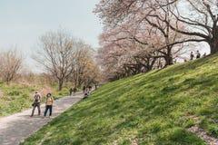 Kyoto, JAP?O - 3 de abril de 2018: Os povos apreciam ver a flor de cerejeira de floresc?ncia bonita em Yawatashi imagens de stock
