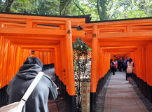 KYOTO, JAPAN - 23. OKTOBER 2012: Ein Tourist geht durch torii Tore Stockfotografie