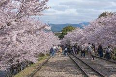 Kyoto, Japan - April 5, 2016: Keagehelling met sakura Stock Afbeeldingen