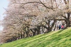Kyoto, JAPAN - April 3, 2018: People enjoy seeing beautiful blooming cherry blossom at Yawatashi stock photography