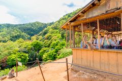People enjoying with monkey. Kyoto, Japan - April 27, 2017: tourists photograph and feed Macaca Fuscata or Japanese macaque from the hut atop Iwatayama Monkey Stock Photography