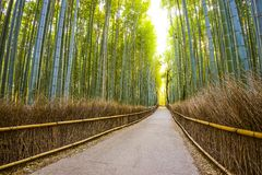 Kyoto, Japan Bamboo Forest Stock Images