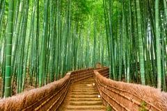 Kyoto Japan bambuskog Royaltyfria Bilder
