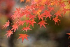 Kyoto, Japan at Chishaku-in Temple in the autumn. Season Stock Image