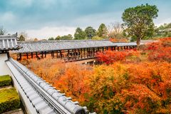 Tofukuji temple with autumn maple in Kyoto, Japan stock photos