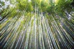 Kyoto, Japan - green bamboo grove in Arashiyama Stock Images