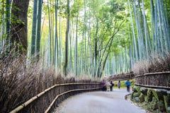 Kyoto, Japan - green bamboo grove in Arashiyama Royalty Free Stock Images