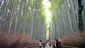 Kyoto, Japan - green bamboo grove in Arashiyama. Kyoto, Japan - Nov 29, 2013: Kyoto, Japan - green bamboo grove in Arashiyama stock footage