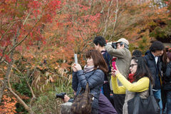 KYOTO, JAPAN - NOV 24: autumn foliage at Eikando Temple on Novem Royalty Free Stock Images