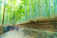 KYOTO, JAPAN - Nov 23, 2016 : Bamboo forest at Arashiyama, Kyoto. Japan. Bamboo forest is famous in Kyoto and the most popular for tourist Royalty Free Stock Photos