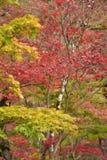 KYOTO, JAPAN - 24 NOV.: de herfstgebladerte bij Eikando-Tempel op Novem Royalty-vrije Stock Afbeeldingen