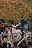 KYOTO, JAPAN - NOV 28, 2015: Many tourists visit the Tofukuji Te Royalty Free Stock Images