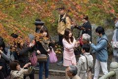KYOTO, JAPAN - NOV 28, 2015: Many tourists visit the Tofukuji Te Royalty Free Stock Image