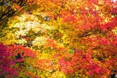 Kyoto, JAPAN - Nov 16, 2013: A pavilion at Jingo-ji, Japan. Jing Royalty Free Stock Photo