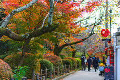 KYOTO, JAPAN - NOVEMBER 23, 2016 Autumn red maple foliage popular of people and photography viewpoint on street for visit Eikando Royalty Free Stock Photos