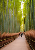KYOTO JAPAN - November 12: Banan till bambuskogen i Kyoto, arkivbilder