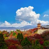 Kyoto, Japan - 25. November 2016 - der schöne Momiji-Herbst c lizenzfreies stockfoto