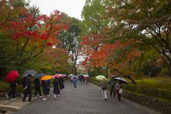 Kyoto japan - november9,2018 group of tourist attraction to kinkakuji temple one of most popular traveling destination in kyoto stock photography