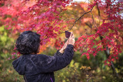 KYOTO, JAPAN - November, 18, 2014: Jong Japans meisje Royalty-vrije Stock Afbeelding