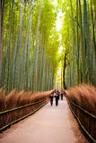 KYOTO, JAPAN - November 12: The path to bamboo forest in Kyoto, Royalty Free Stock Images