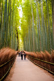 KYOTO, JAPAN - November 12: The path to bamboo forest in Kyoto, Stock Photo